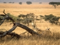 Africa1_085