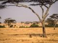 Africa86_209