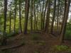 monty-treespoint_hdr2-web-1000px