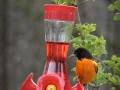 birdsatlyons-10