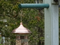 birdsatlyons-3