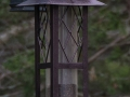 birdsatlyons-7