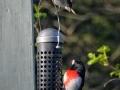 birdsatlyons-9
