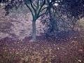 AutumnSplendor-4